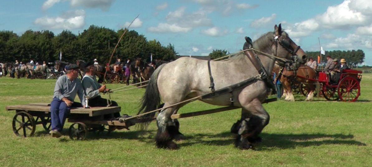 HorseP2016Rock_DubblSpn2